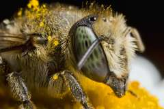 Jigsaw : Beautiful Bee